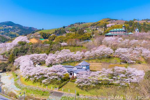 2019遊栗館桜1.jpg