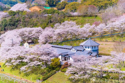 2019遊栗館桜2.jpg