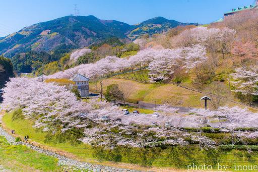 2019遊栗館桜3.jpg