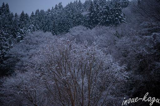 マスターウォールと雪景色3.jpg