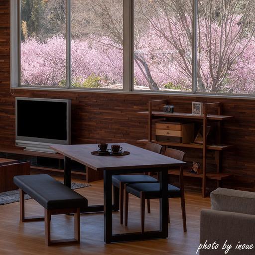 春の店舗紹介2.jpg
