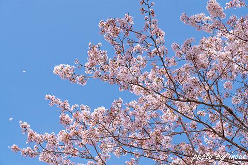 春の店舗紹介6.jpg