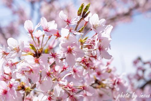 春の店舗紹介7.jpg
