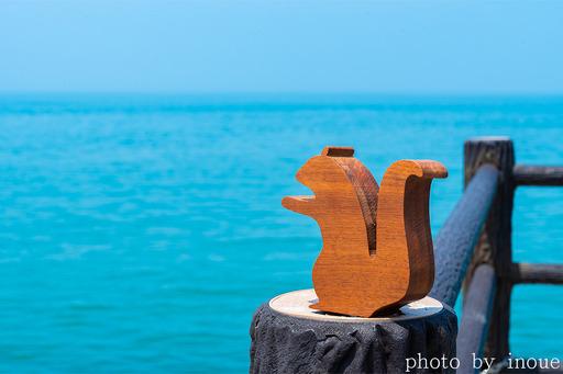 綺麗な愛媛の海とナッツ君1.jpg