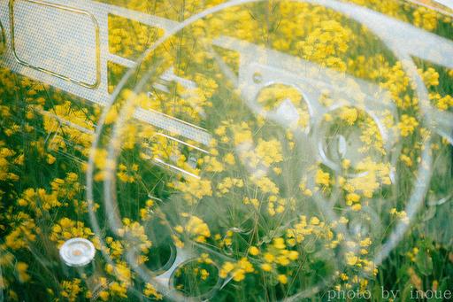 菜の花巡り4.jpg