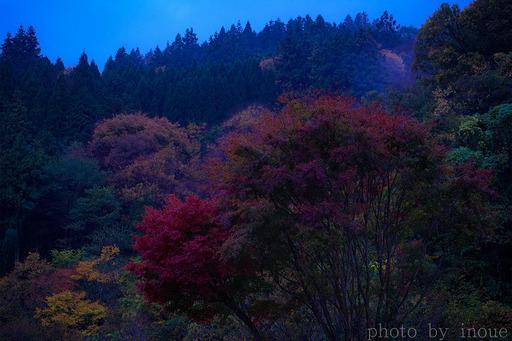 雨の日の紅葉.jpg